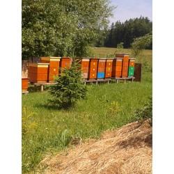 Prodej medu Alois Plavec- Jihlava