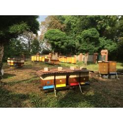 Prodej medu- Martin Polončík- okres Louny