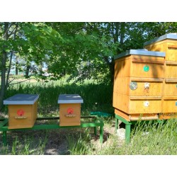 Prodej medu Simona Jiránková- Velké Přítočno- okres Kladno