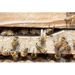 Prodej medu Jindřich Jukl- Písek