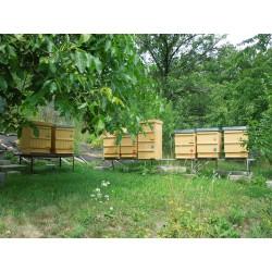 Prodej medu David Řezník- Boskovice- okres Blansko
