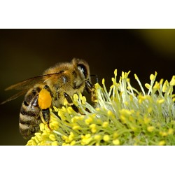 Prodej medu Martin Vaisar- Vernéřovice- okres Náchod