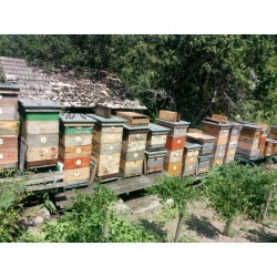 Prodej medu David Zámeček- Brno-střed