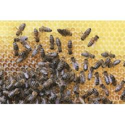 Prodej medu Tomáš Hubálek- Frenštát pod Radhoštěm- okres Nový Jičín