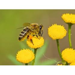 Prodej medu Filip Manžel- Kouty- okres Nymburk