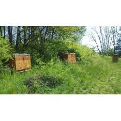 Prodej medu Josef Nymsa- Rychnovek- okres Náchod