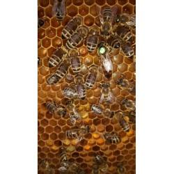 Prodej medu- Zdena Millerová- okres Semily