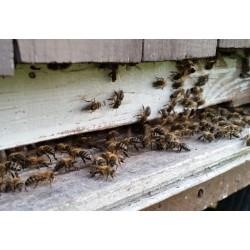 Prodej medu-Milan Drbálek- okres Třebíč