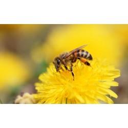 Prodej medu- Milan Menc- okres Svitavy