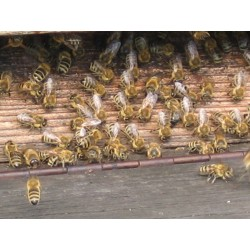 Prodej medu- Stanislav Bukovský- okres Nymburk