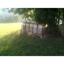 Prodej medu- Jan Boštík- okres Svitavy