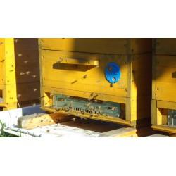 Prodej medu- Marek Mocek- okres Beroun