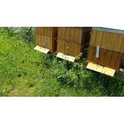 Prodej medu- Ján Kuchta- okres Plzeň-město
