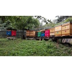 Prodej medu- Rostislav Odehnal- Sokolov