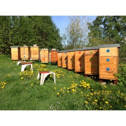Prodej medu- Jiří Šána- Brno-Kohoutovice- okres Brno-město