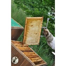 Prodej medu- Miroslav Váňa- Písek