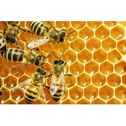 Prodej medu- Ladislav Samek- Cheb